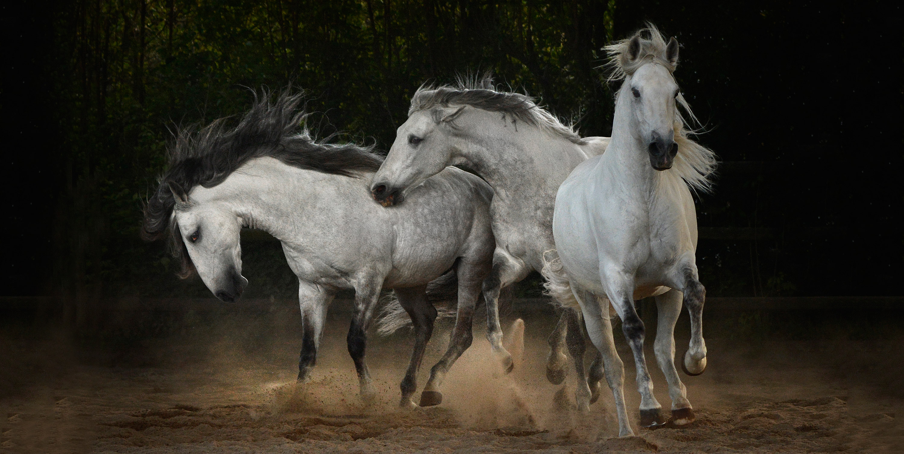 Professional Wild Horse Photography